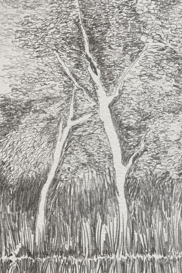 Sylvie Pohin-details arbres